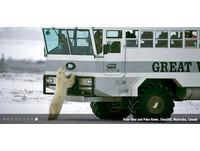 賞熊團出發!加拿大推「行動旅館」與北極熊親密接觸