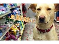 「請我吃嘛!」大黃犬枯坐擺醜臉 施壓店員請吃罐罐