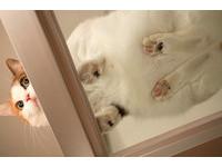 粉嫩肉球都被看光光!快來學偷拍貓咪的超可愛小撇步