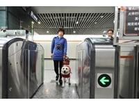 明年5月1日起 北京允許導盲犬進地鐵