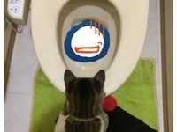 貓的報恩?主人想抽菸找不到 入廁驚見整包在馬桶漂