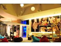 星國咖啡店「1年內害死7隻貓」 老闆:貓和店一起頂讓