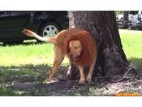 公園驚現「嗜血猛獅」襲擊路人 背後的真相竟然是?