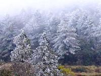 寒流晚上才報到 合歡山已經下雪!