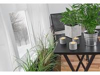 美忍者/「房間加點綠色植物」 出乎意料的健康效果