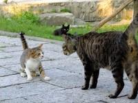 淡水街貓「斑斑」扮演幼稚園園長 英雄退休告老還鄉