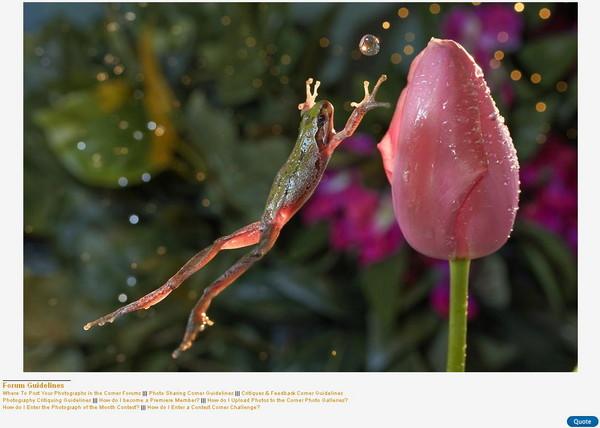 拍到青蛙跳跃接球 华裔摄影师李威廉夺冠