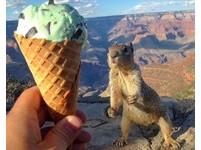 「我想吃,拜託!」網友用薄荷冰淇淋 成功勾到小松鼠