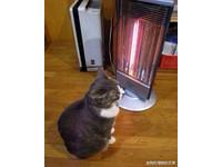 喵星人已知使用暖爐,還會抬手取暖。(圖/新浪微博)