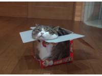 為什麼貓迷戀紙箱? 獸醫實驗:真的紓壓又療癒