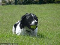 英國最成功的警犬就是牠! 8年嗅出千萬英鎊贓物贓款