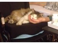 飼主重傷出院後... 喵星人變「貓看護」緊跟左右