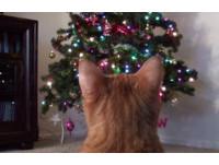 又崩壞了嗎? 快來看喵星人眼中的聖誕節...