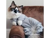 超萌黑色妙鼻貼小貓Albert。(圖/翻攝自「albertbabycat」)