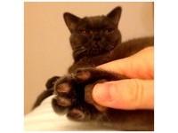 貓邪教文/貓奴以愛之名的「八大惡習」