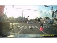 帶駝背奶奶過馬路 導護志工貓:慢慢走沒關係,我等妳