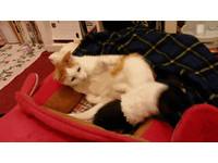 室友不睡覺扭扭扭 大貓霸氣抬腿...「一腳踹下床」