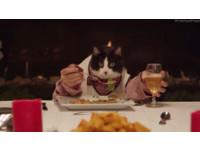喵星人霸氣坐「主位」 宴請13隻狗食客吃飯
