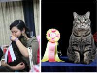 19年前被丟棄在垃圾桶 虎斑貓「Brita」成貓展冠軍