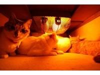 「貓叔」家所有貓成員都消失? 統統在暖爐桌底下...