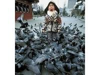 自己就是羽絨外套!日本鴿鴿的冬季禦寒術