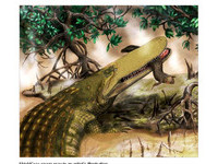 比公車還要大! 摩洛哥驚見18公尺史前盾頭鱷