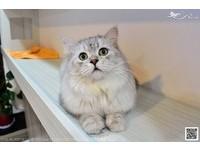 不想錯過幸福的機會!「貓咪認養會」一小時面談挑主人