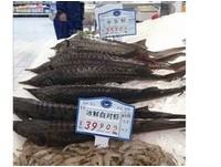 比蝦子還便宜! 浙江超市賣「活化石中華鱘」
