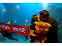 一對熱戀中異國情侶 在澎湖水族館成就了一件浪漫的事