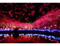 【廣編】2015九族櫻花祭 驚豔你的2月天!