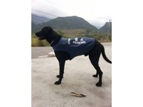 花蓮縣玉里警分局永豐派出所黑色高砂犬「王小胖」穿上警犬(Police Dog)制服,擔任起警戒的工作。(圖/永豐派出所提供)