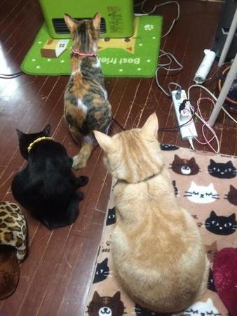我们也是需要冬眠的 猫猫狗狗的冬季御寒大法