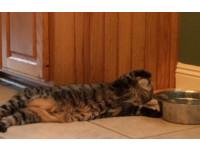 「懶惰貓」把手伸進碗沾濕 再拿出來舔著喝