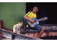 唯一的聽眾 「知音貓」讓吉他手不孤單