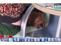 「豹紋女毒蟲」開賓士飆速140 車上貴賓狗嚇到皮皮挫