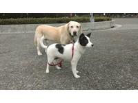 身為米克斯犬的禮物!小狗「米妮」身上有迪士尼花紋