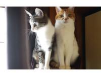 只要一支逗貓棒 立刻分出老貓、小貓