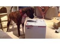 箱子裡面有啥? 狗狗緊盯不放...下一秒卻嚇得倒退了