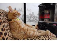 爽貓無誤!喵星人「大叔坐姿」在暖爐前冥想