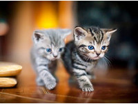 雙胞胎都沒你們這麼像!同步率100%的動物奇蹟萌照