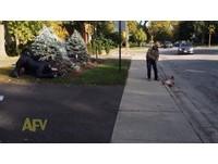 狗被「黑色巨貓」嚇到滾落馬路 主人收緊牽繩救了牠