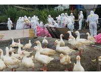 安徽湖南增4例H9N2流感病例 陸委會發布黃色旅遊警示