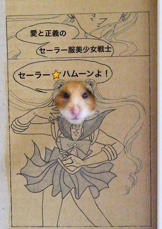 卡通仓鼠简笔画-日本巧手饲主自制漫画小纸箱 让萌鼠一秒变美少女战士