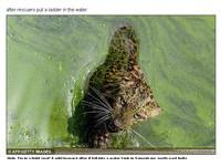 花豹墜4公尺高蓄水池 受困1小時後狼狽爬梯子逃脫