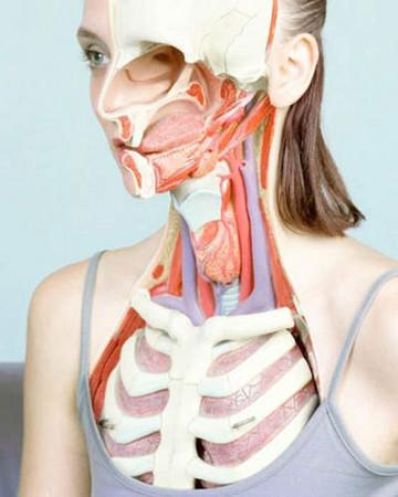 d95087 獵奇向「女體解剖寫真」 揭露衣服脫下後的臟器美感《ETtoday 新聞雲》