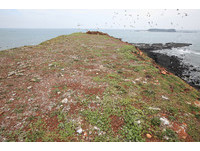 200顆保育類燕鷗蛋遭竊 澎湖縣府將重罰