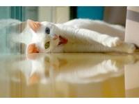 貓咪名叫「陳明珠」 連續三年讓主人大哭又大笑