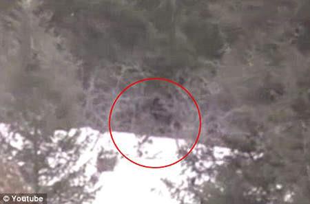 d97129 【影】「大腳怪」穿過樹叢 美愛達荷州發現巨大腳印