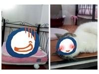 貓奴出國暗自哭哭 寵物旅館卻傳來喵星人「爽呆」樣