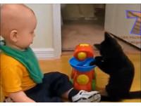 我教你啦!喵星人陪玩「學齡前玩具」 比小主人更起勁